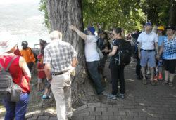Natura Senza Barriere sul lago di Pusiano e nel Bosco della Buerga - Parco Naturale Valle del Lambro (Lombardia)
