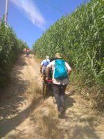 Natura per tutti dal Parco del Drago al Fiume Tevere - Ass. Il Cammino Possibile e Insieme per la Curtis Draconis (Lazio)