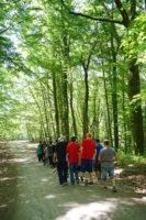 A spasso tra i boschi in sicurezza. Una passeggiata per tutti - Riserva Naturale Lago di Vico (Lazio)
